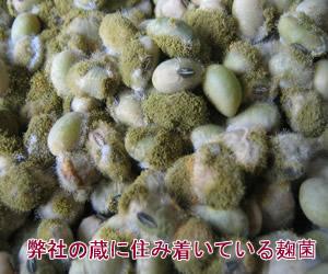 蔵つき麹菌